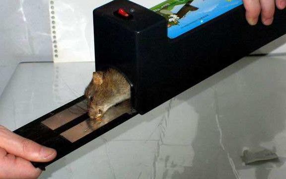 企业单位除虫灭鼠
